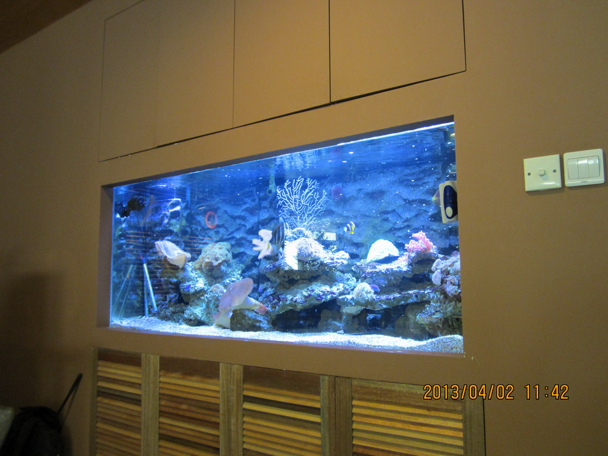 办公室鱼缸二