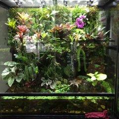 热带雨林缸二