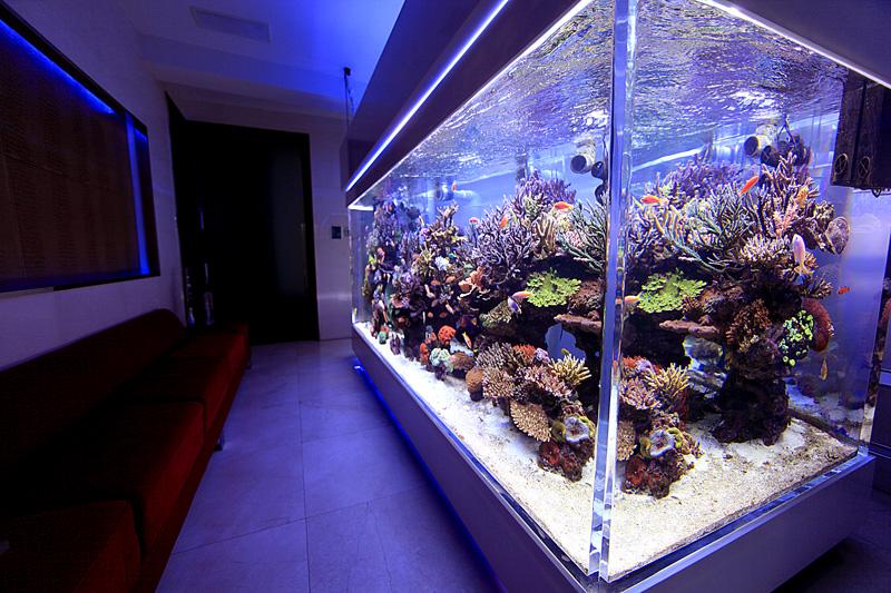 艺海园水族馆设计大讲堂之大型鱼缸制作专业知识