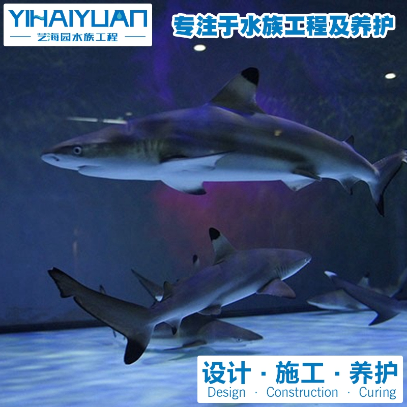 鲸鲨馆设计建造