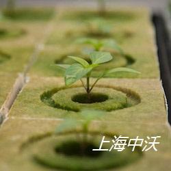 智能化植物育苗系統