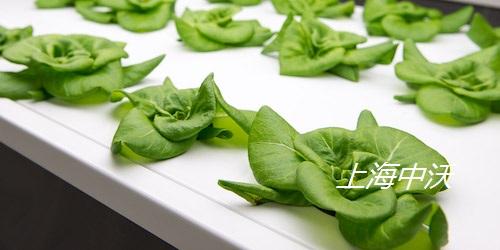 智能化霧培植物生長箱