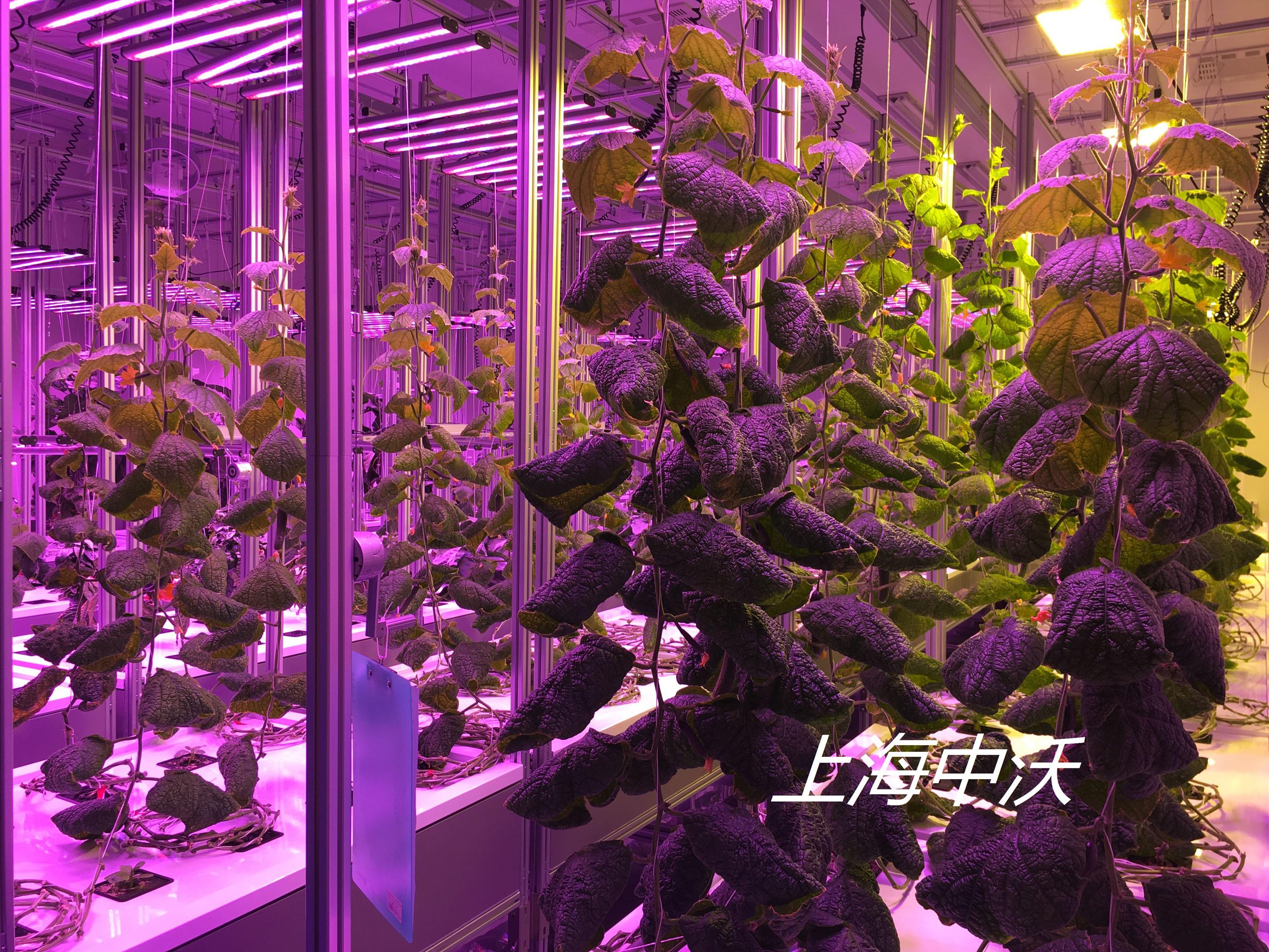 全自動霧培植物生長系統