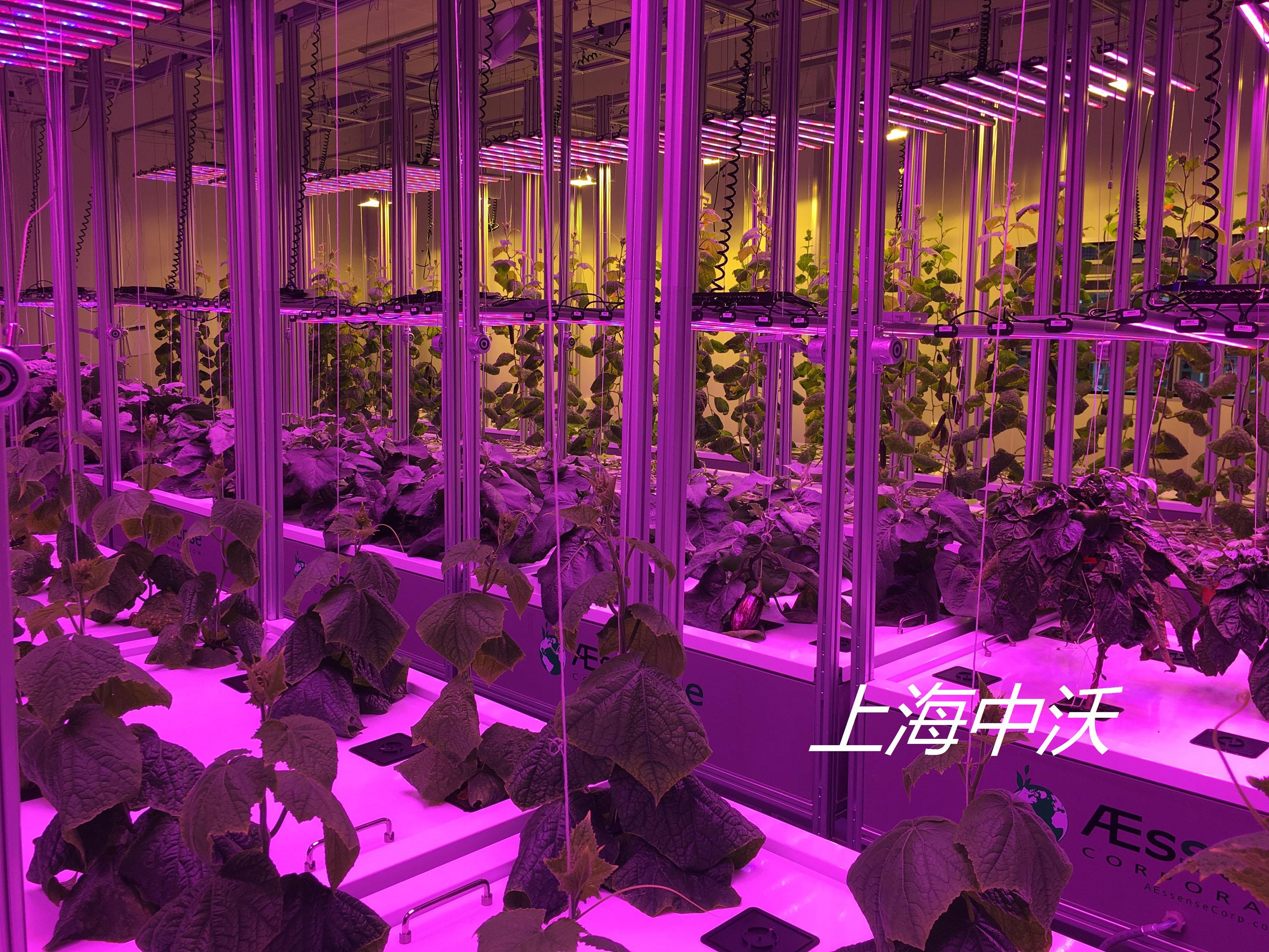 植物種植工廠