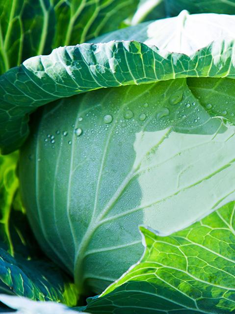 如何定义绿色食品