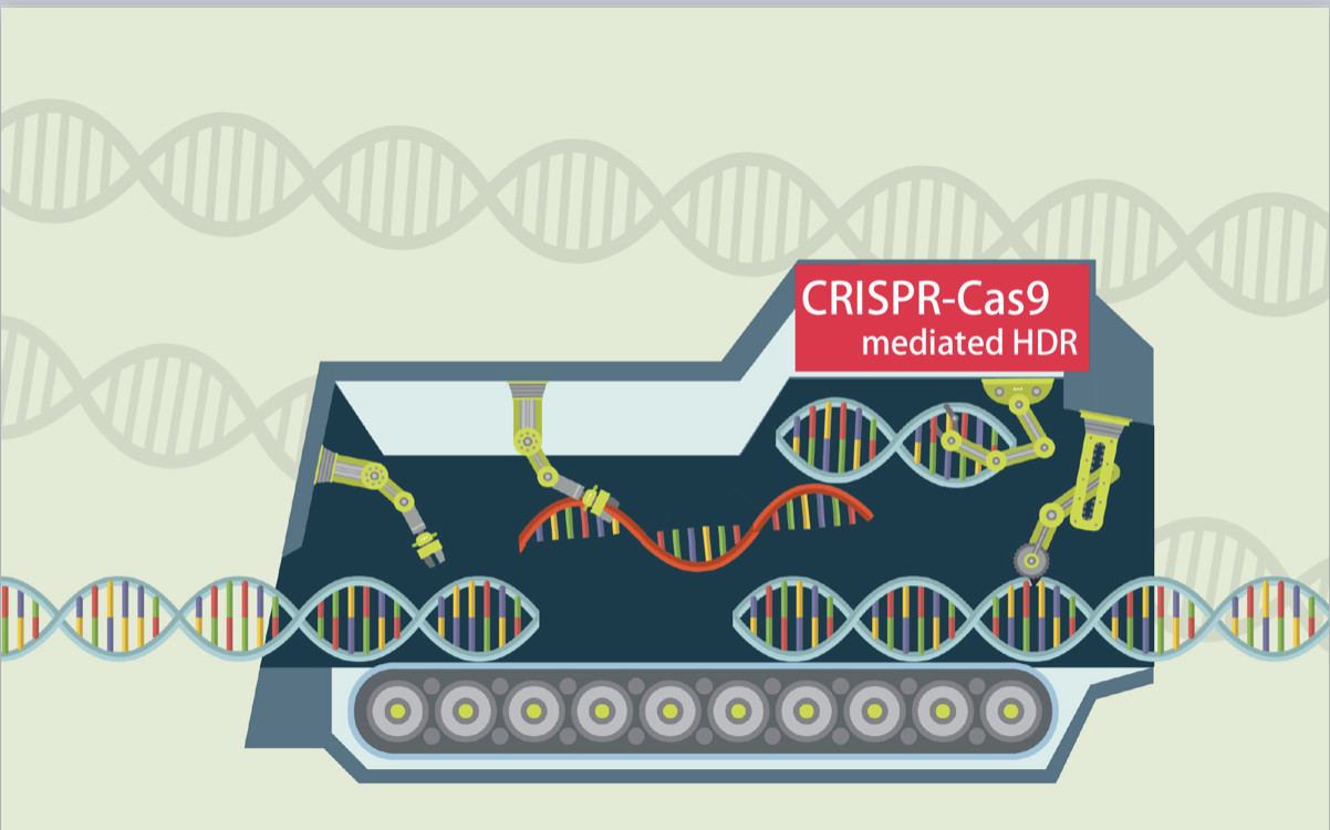 CRISPR-Cas9介导同源重组的指南概要