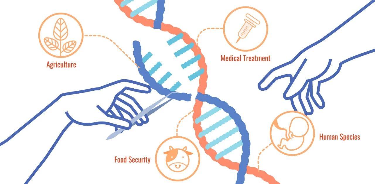 一个神操作!提升CRISPR介导HDR效率数倍
