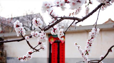 十里杏花谷,春游好时分