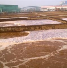 诺维信硝化菌Bioremove5805帮助化工厂降低氨氮排放
