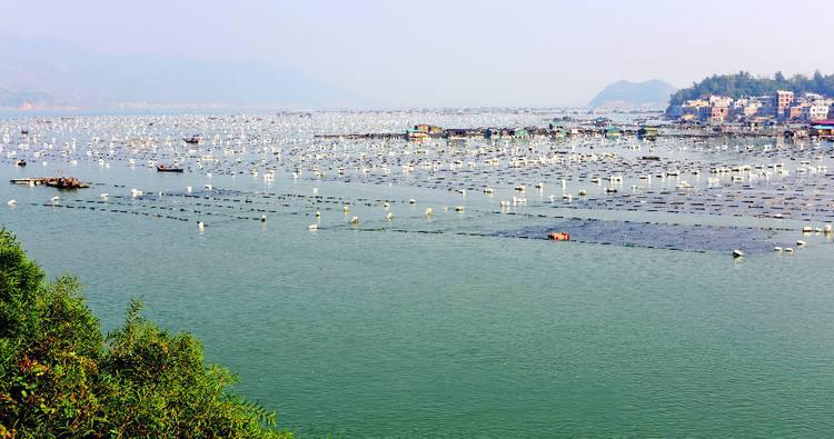 海參鮑魚貝類網箱