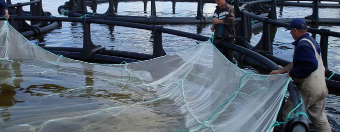 养鱼苗用尼龙网