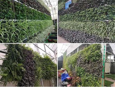 立体绿化厂家