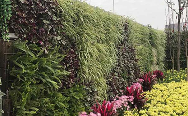 立体绿化形式之墙面绿化的相关注意意向是什么
