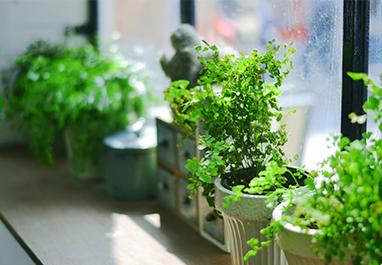 为什么要选择租赁植物而不选择直接购买?