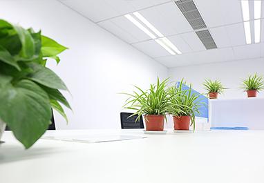 办公室植物租赁最常使用的绿植是什么?