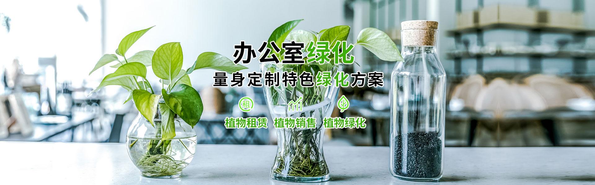 办公室植物租赁_上海ag真人园艺有限公司