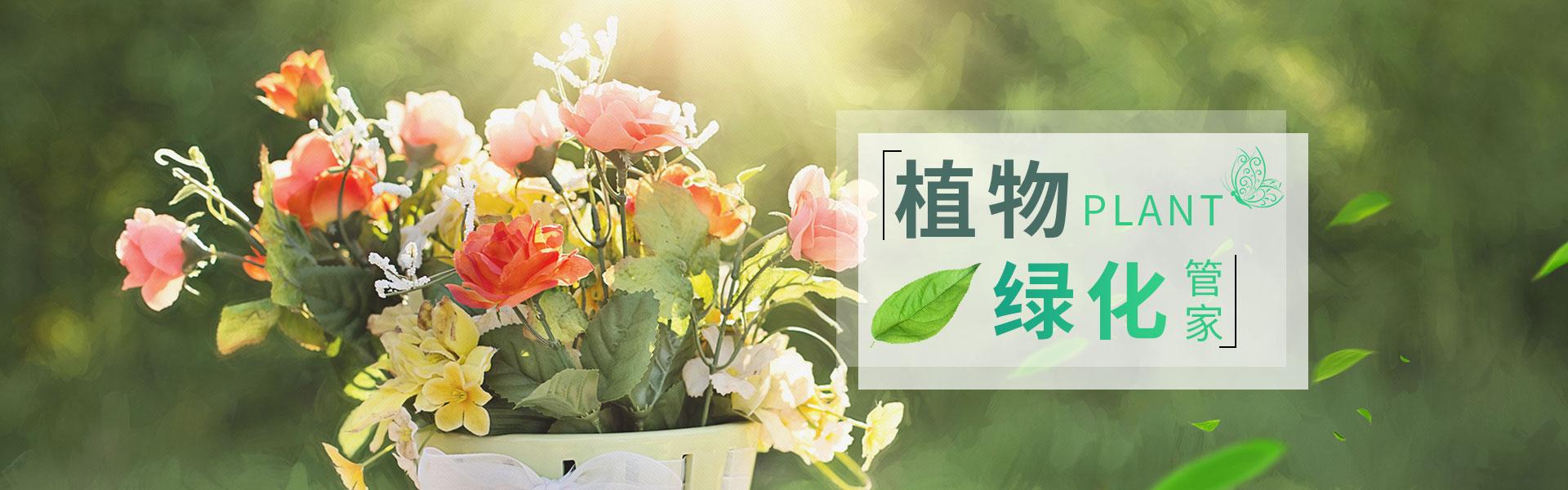 植物租赁_上海ag真人园艺有限公司