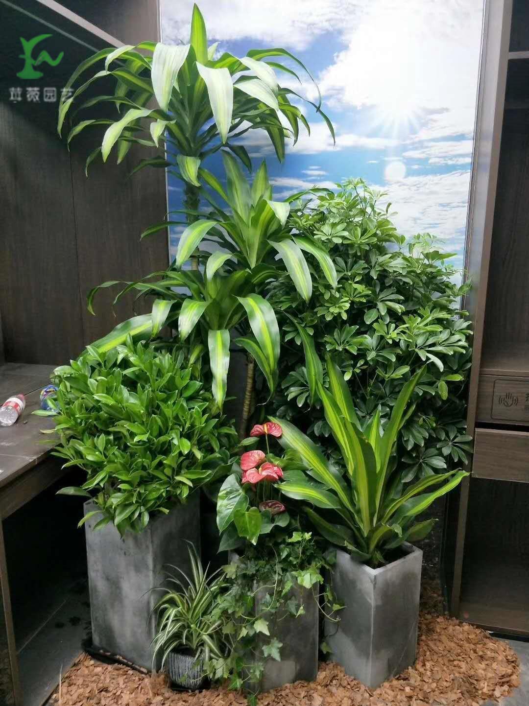 植物租赁选择的时候应该注意什么-上海ag真人园艺有限公司供