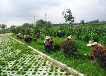 苗木在春季各节气的绿化养护小方法-上海茸微园艺有限公司供