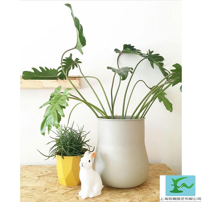植物一年的租赁养护技巧