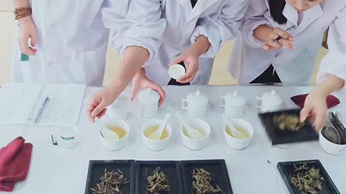 评茶师培训