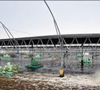对虾密集养殖区