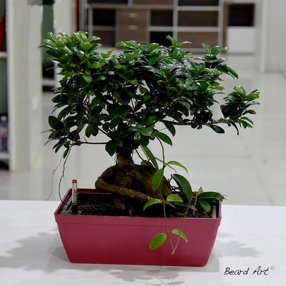 兰州办公室植物租摆有什么好处与作用