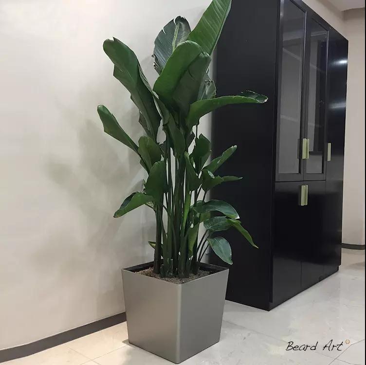 兰州植物租摆技巧