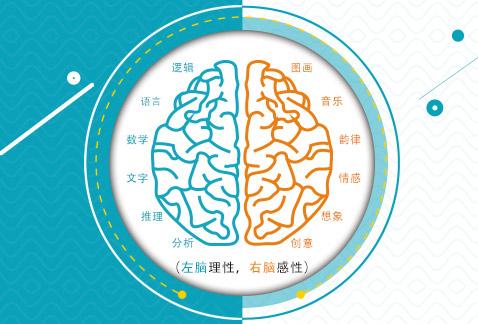 全脑开发是怎么去提升孩子的实践能力呢