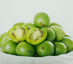 软枣猕猴桃引种的必要性