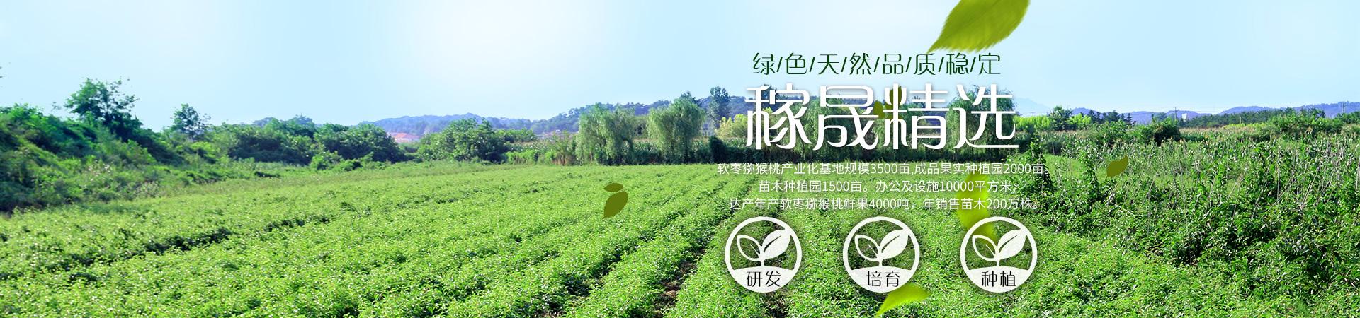 丹東軟棗獼猴桃種植供應基地,奇異莓產地美麗風景。