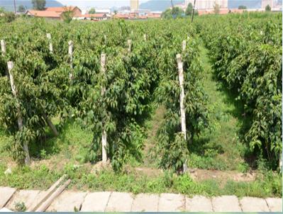 适合软枣猕猴桃生产的土壤改良
