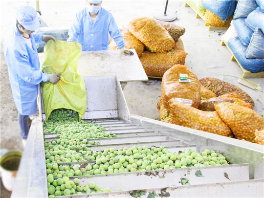 Green Plum Juice Production Line