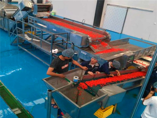 Wolfberry puree and dried fruit production line