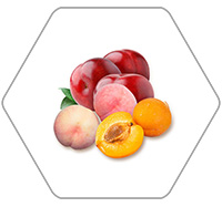 Stone fruit processing