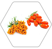wolfberry Seabuckthorn