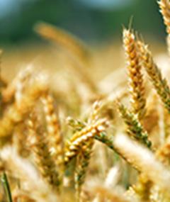 食品和农业