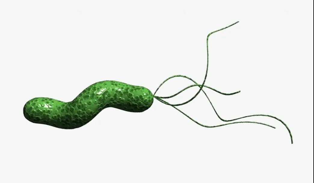胃癌元凶幽门螺杆菌,益生菌竟是根除它的好帮手