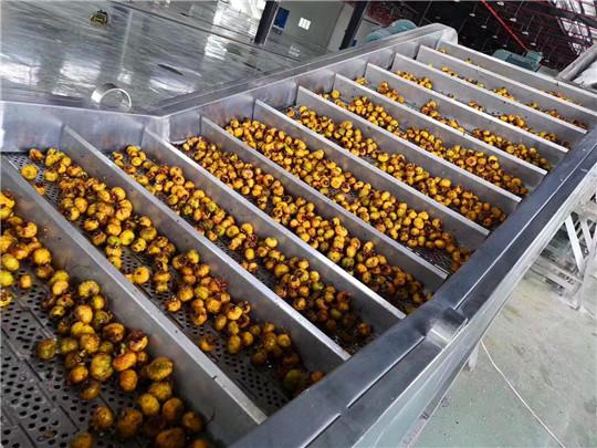 10噸/時刺梨原汁生產線