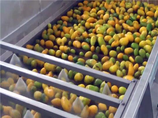 芒果原漿生產線