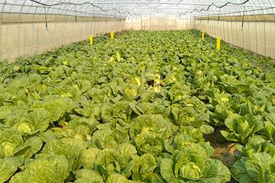 农产品配送和食堂自己采购食材有什么不同?