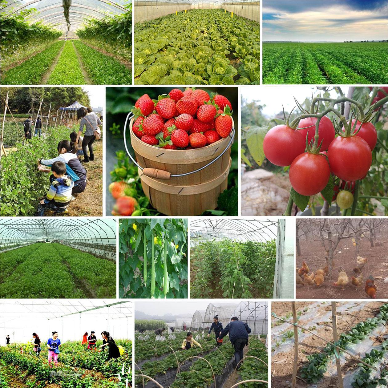 你知道怎么选择蔬菜配送公司吗?