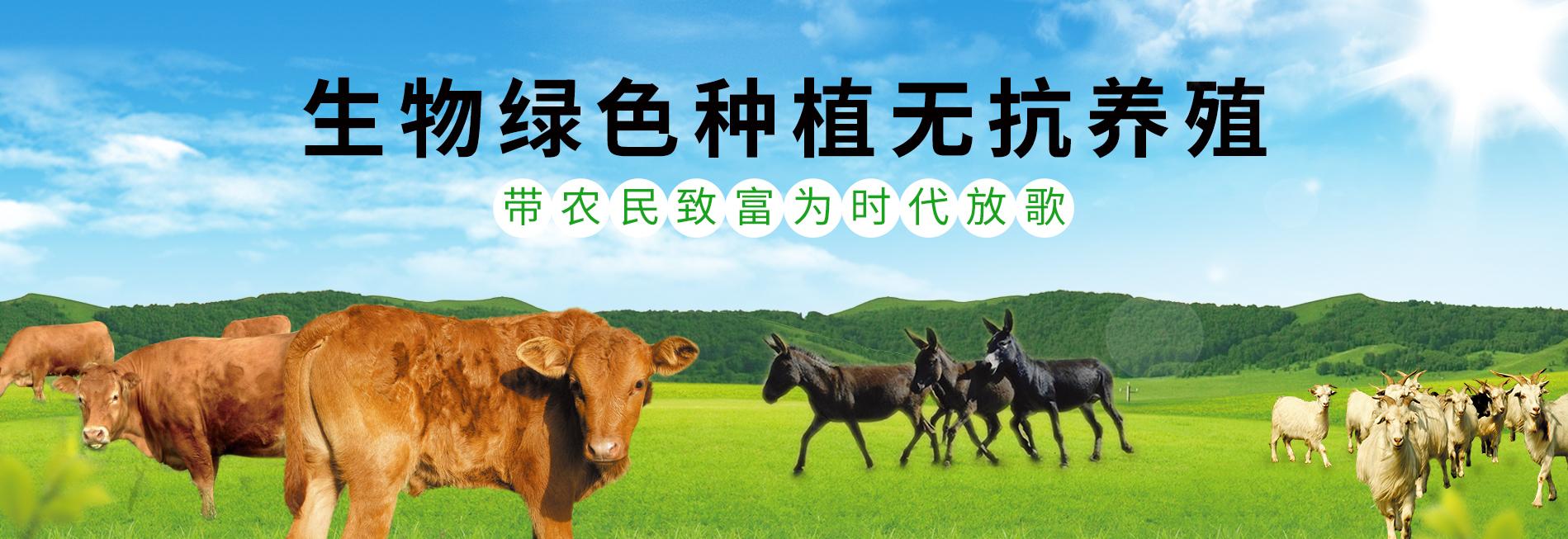 吉林省亚虎国际老虎机APP养殖场