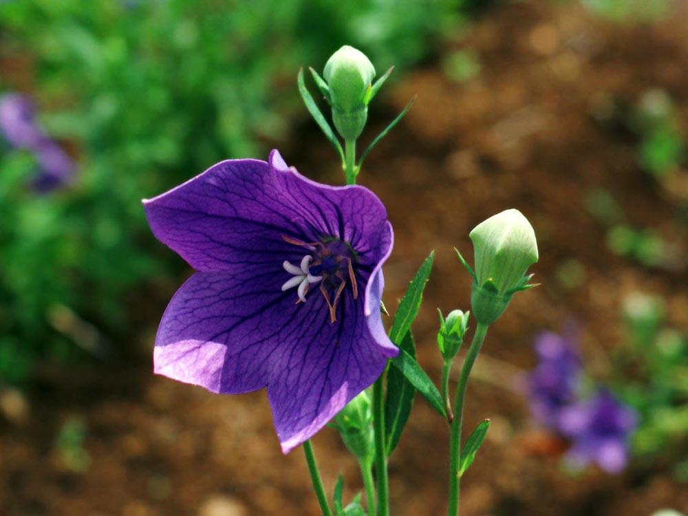 长春花卉批发告诉你八种冬季开花不断的盆景花卉
