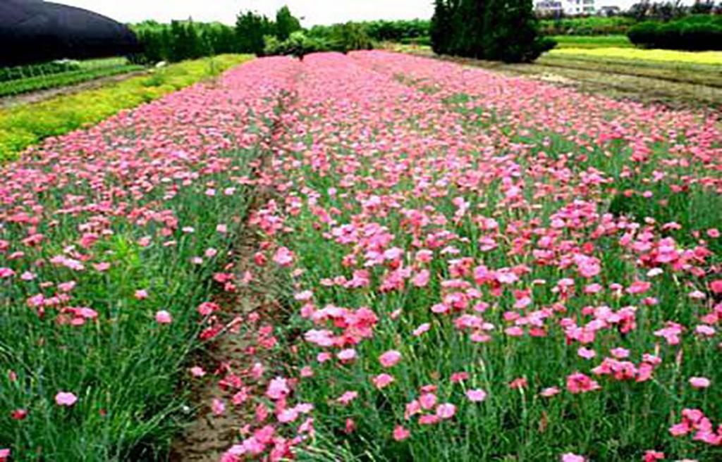 长春市大地宿根花卉基地分享浇花小技巧!