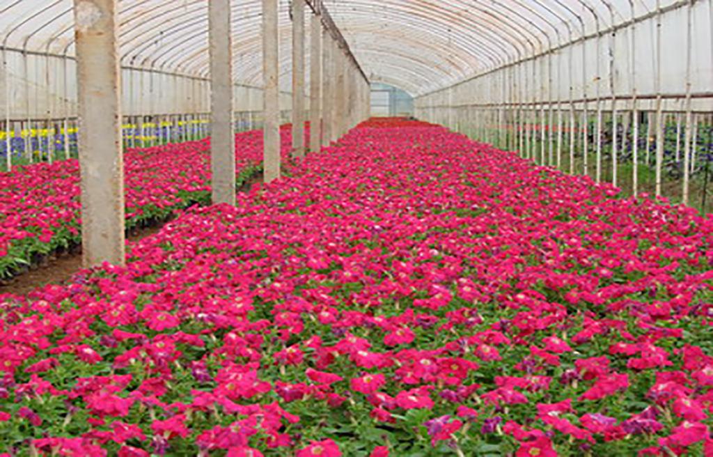 长春大地花卉,批发花卉同时还会告诉你适合养什么花卉
