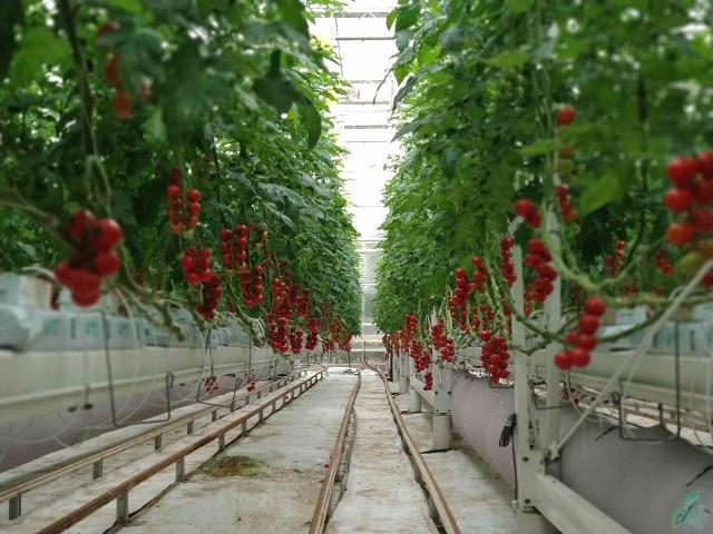 无土栽培技术能有效缓解土壤污染问题