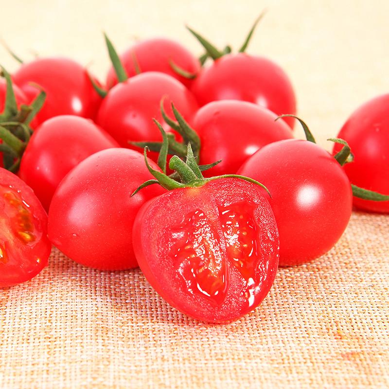 小番茄来了2