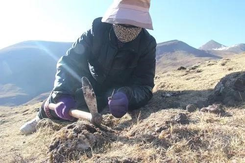蟲草都有什麽樣的保鮮方法—青海特產