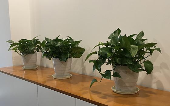办公室绿植你摆对了吗